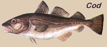 Bacalhau Cod